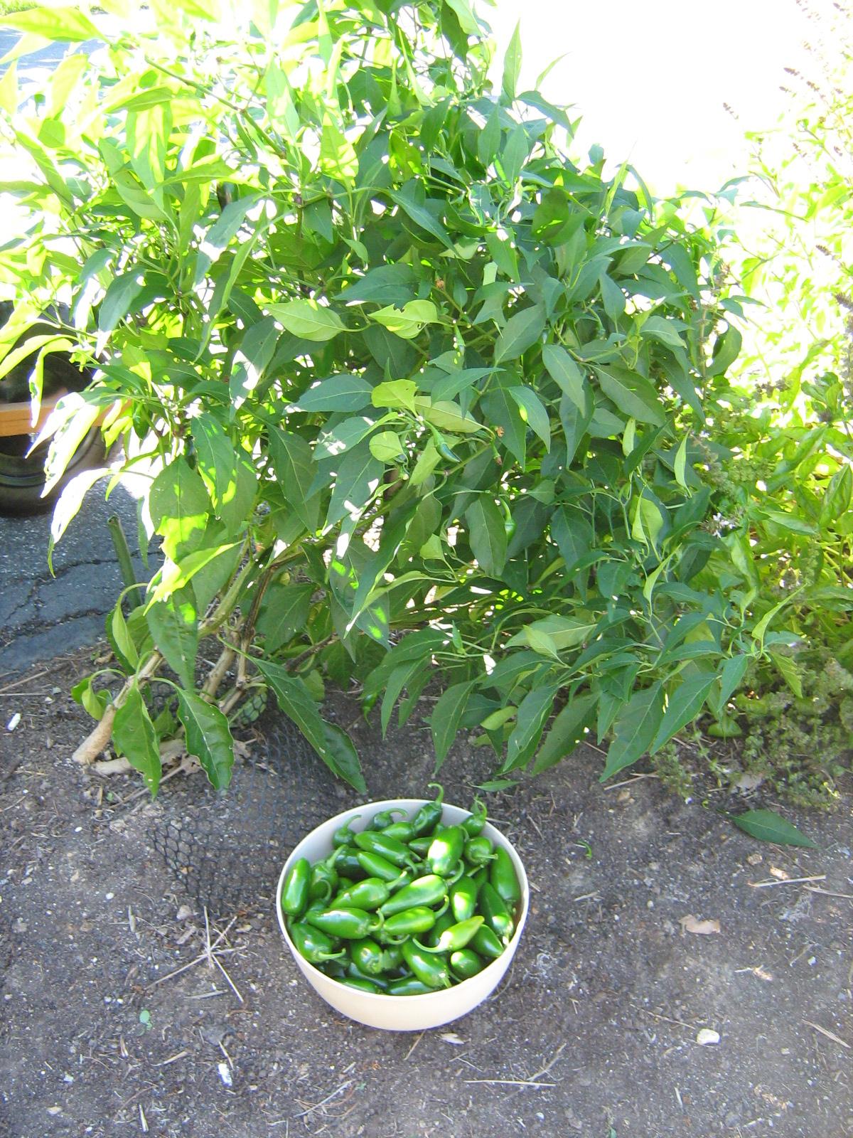 Garden Bush: DbaPlan B Photo Blog